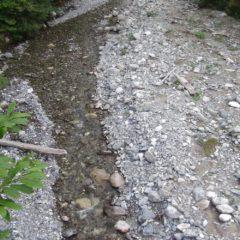En Haute-Savoie, la sécheresse s'amplifie