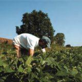 La Confédération Paysanne s'engage à ce que «nos concitoyens soient bien nourris avec de bons produits»