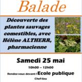 Samedi 25 mai, balade pour découvrir les plantes sauvages comestibles avec Hélène Haltherr